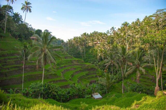 اندونزی کشور مسلمان پر از پیچیدگی فرهنگی