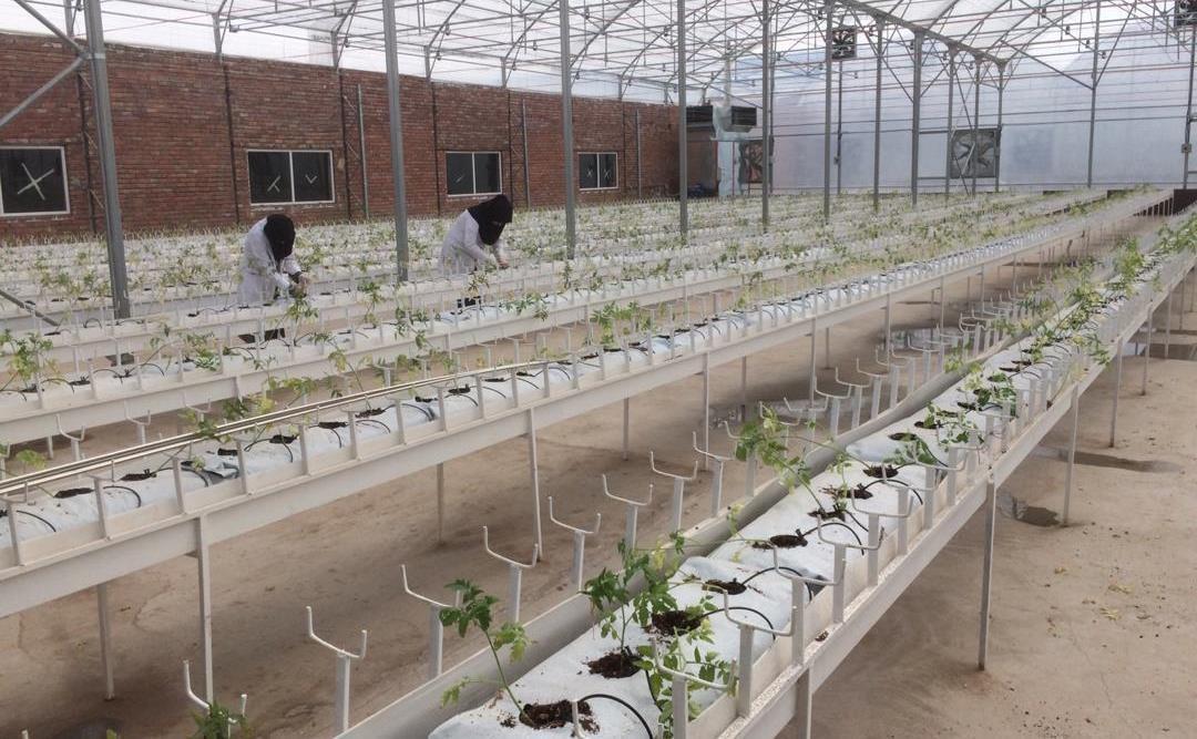 ساخت گلخانه هیدروپونیک در 5 هکتار عملیاتی می گردد، ایجاد مدرسه عالی مهارتی حقوق