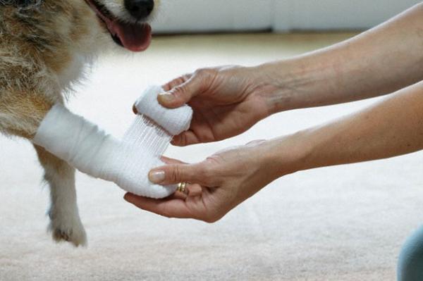 سرمایه گذاری 500 میلیون دلاری امارات در بیمارستان سگ و گربه