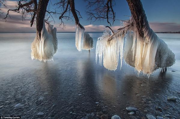 تصاویر خارق العاده از درختان یخ زده
